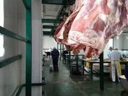 Halal Meat Beef Half/Quarter Carcasses - photo 2