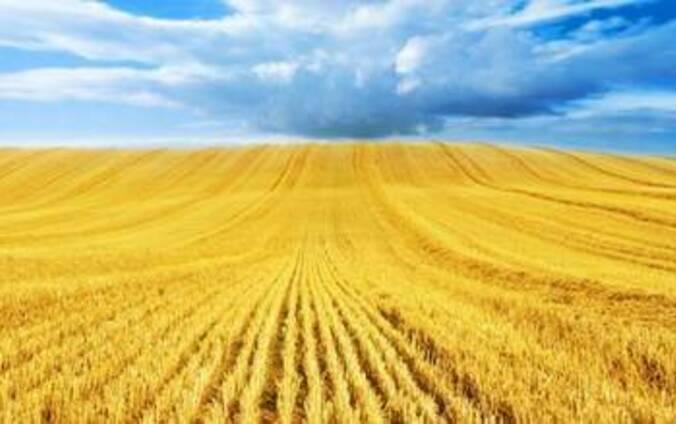 Пшеница , кукуруза , ячмень, рапс, лен, чечевица ФОБ