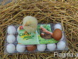 Tray for chicken eggs from PET transparent packaging - photo 2