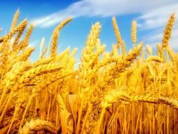 Пшеница, ячмень, кукуруза , фуражное , Масло подсолнечное