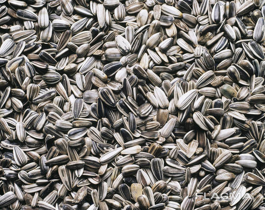 Calibrated sunflower kernels, in bulk from the manufacture