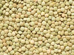 Chickpeas, lentils, peas, wheat, coriander from Russia