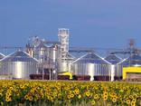 Crude sunflower oil, 1st grade, unrefined, in bulk, Ukraine export (DSTU 4492:2005) - фото 4