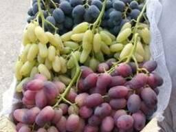 Фрукты и овощи Узбекистана - фото 4