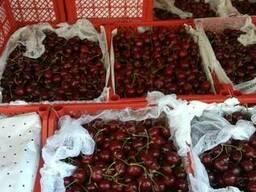Фрукты и овощи Узбекистана - фото 6