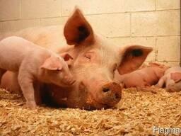 Несменяемая подстилка для животных. - фото 3