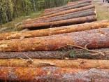 Pine sawn timber any size , Belarus - photo 5