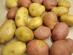 Potato from Belarus