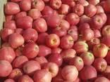 Продаем яблоки разных сортов - фото 1
