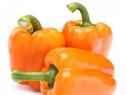 Продам перец болгарский сладкий оранжевый из Египта экспорт