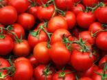 Продам помидоры из Египта экспорт, купить оптом доставка - фото 1