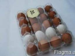 Tray for chicken eggs from PET transparent packaging - photo 4